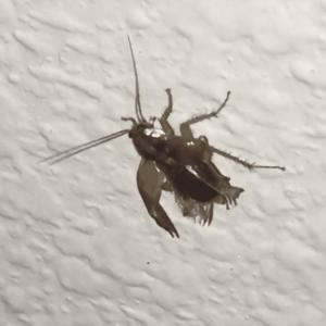 A1HPC Roaches